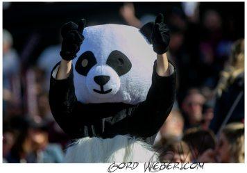 panda20170589