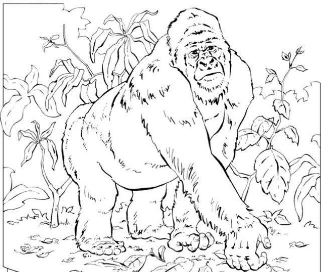 Dibujo para colorear a un gorila en la selva :: Imágenes y