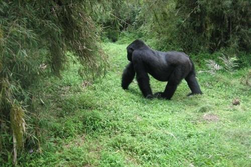12 Day Gorilla Trekking Safari – Rwanda-Tanzania Serengeti Safari