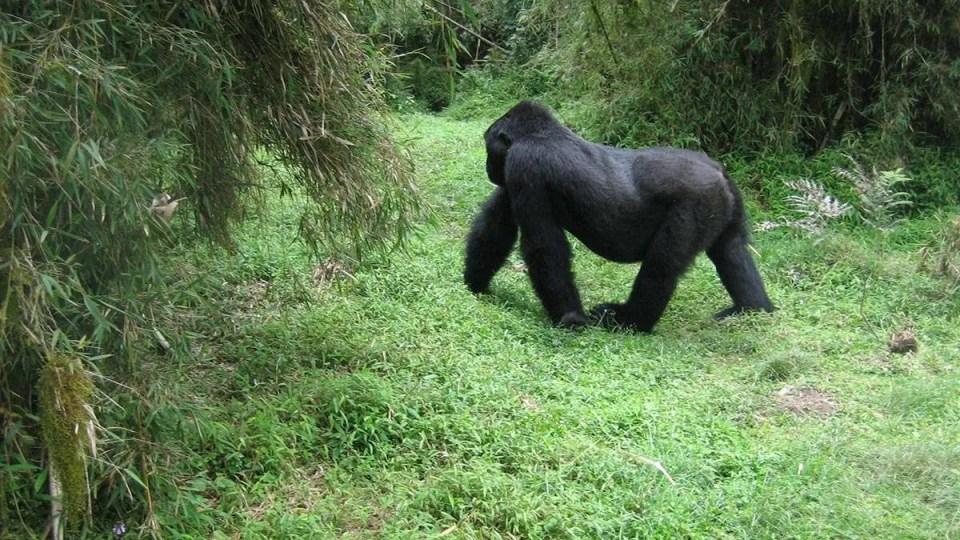 12 Day Gorilla Trekking Safari – Rwanda