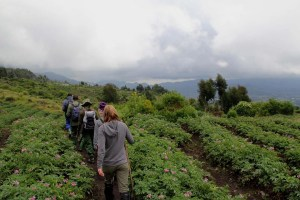 6 Day Gorilla and Chimpanzee Tour - Rwanda-Tanzania Wildlife