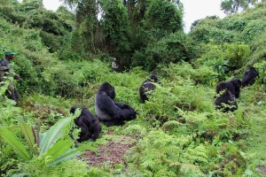 Gorilla Tracking Africa - Rwanda Safaris - 9 Day Gorilla Tracking and Chimpanzee Tour – Rwanda