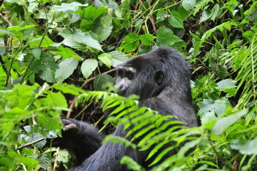 4 Day Gorilla Trekking and Wildlife Safari