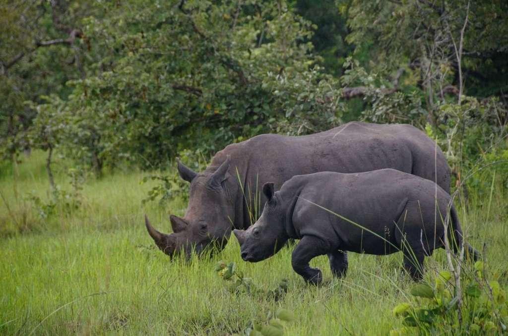 Ziwa Rhino Sancturay