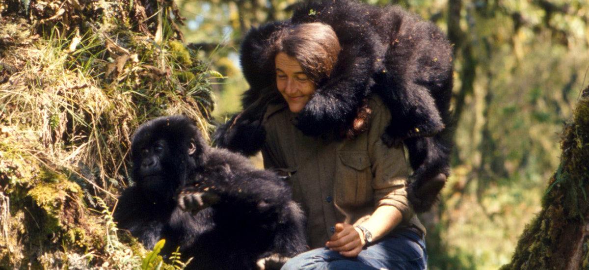 gorillaorgdian01mobile  The Gorilla Organization
