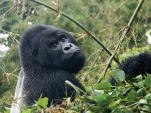 Ultimate Uganda Rwanda Safari - Bwindi Impenetrable Forest National Park