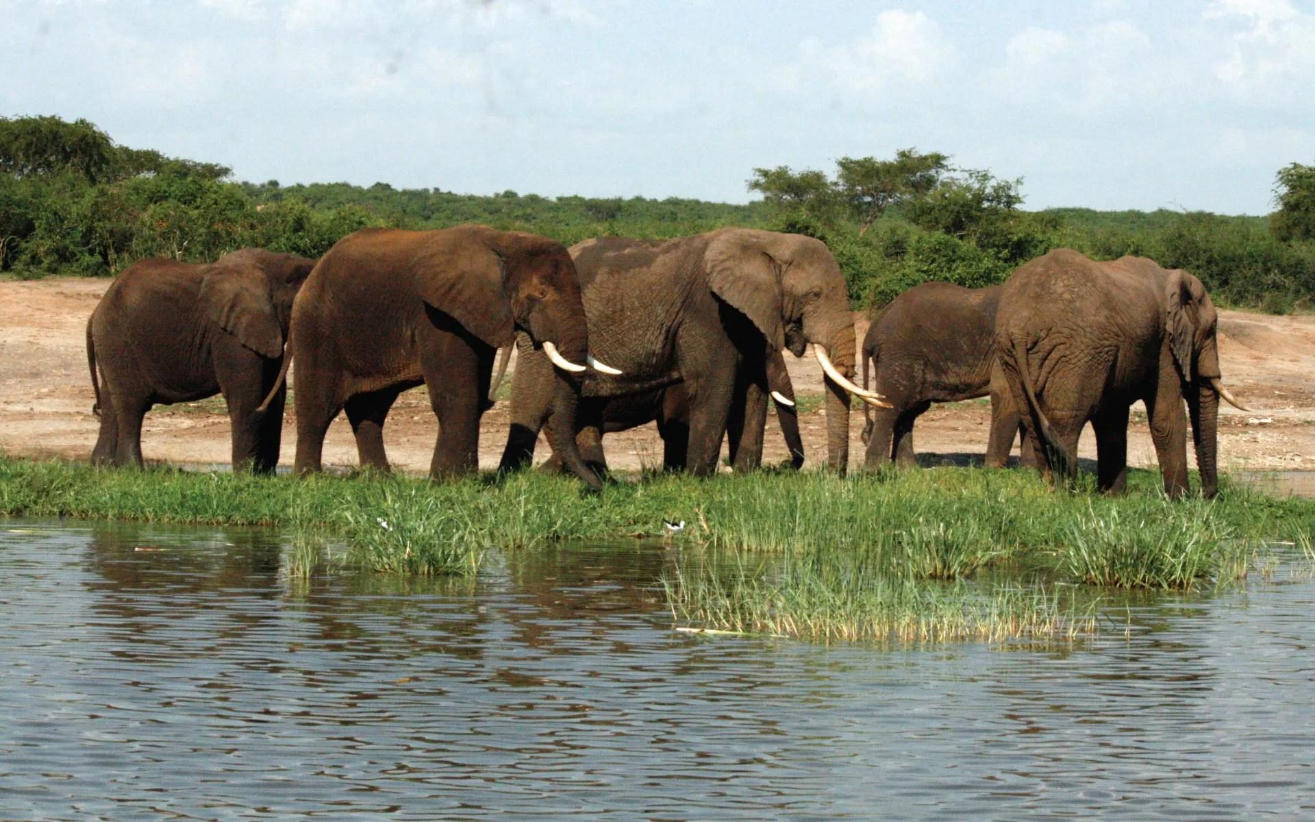 Image result for Queen Elizabeth National Park