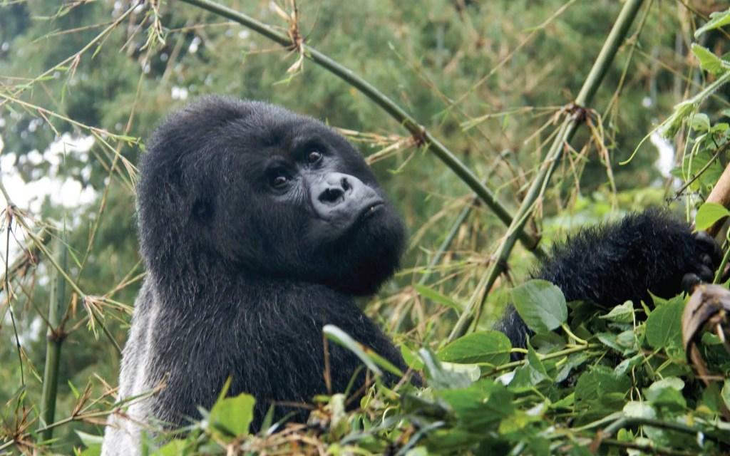 Rwanda Safari Excursion Tour
