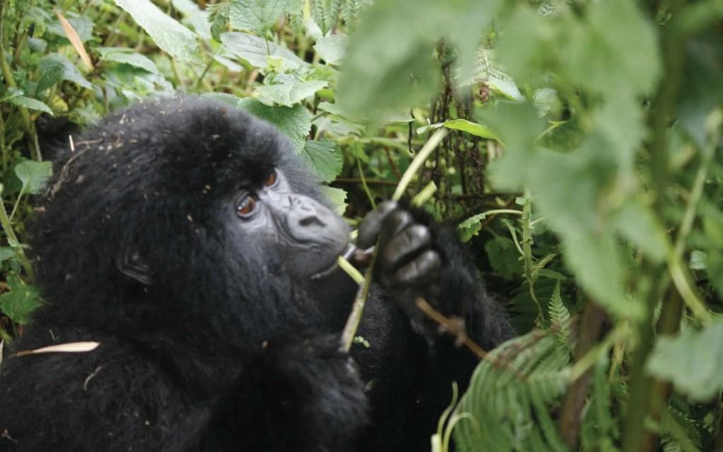 3 Day Rwanda Gorillas Safari Adventure