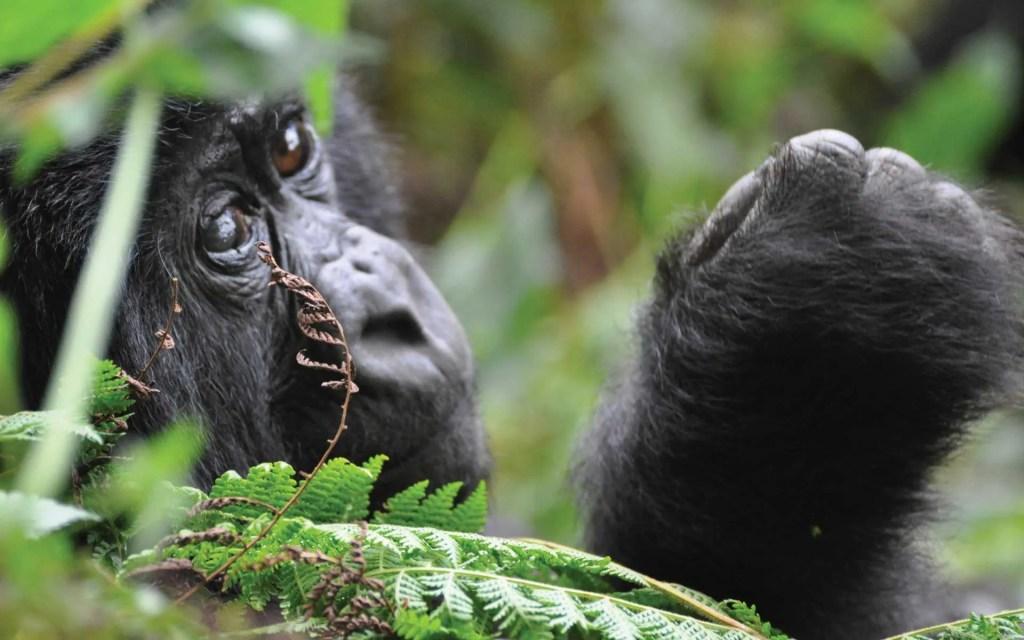 Rwanda Gorillas & Cultural Tour