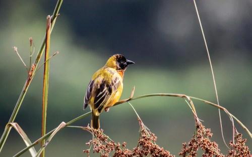 Uganda Birders - Wildlife Tour Safari