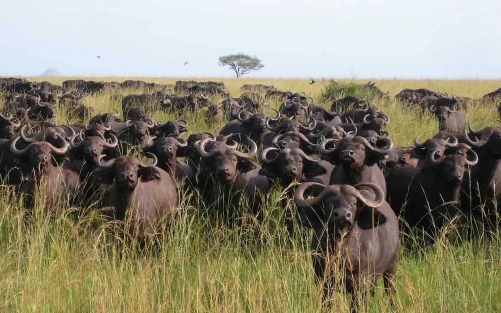 Kidepo Valley National Park Uganda Safari