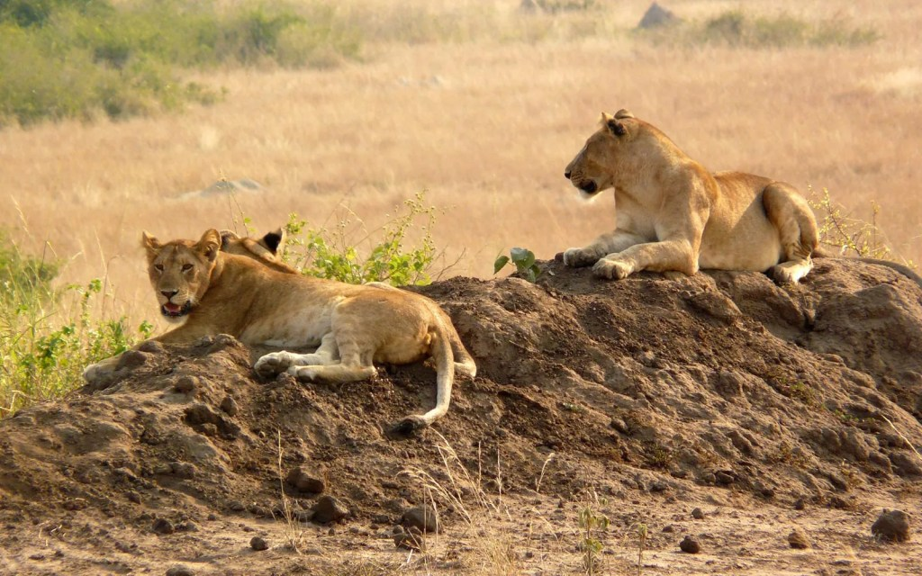 Full day Queen Elizabeth national park, morning game drive and Afternoon boat cruise