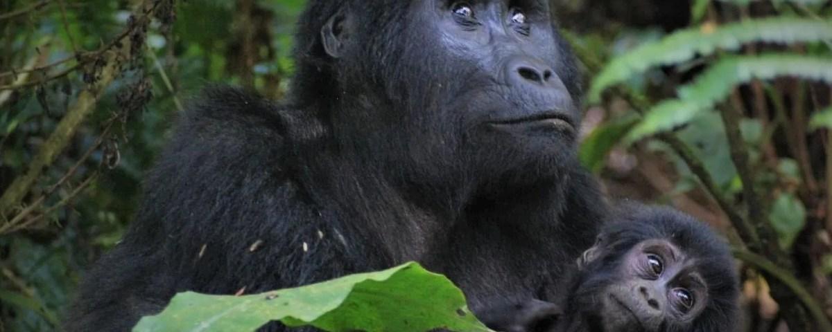 Bwindi Gorilla Trekking Sectors
