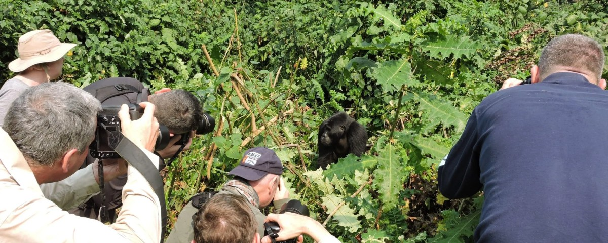 Mountain Gorilla Filming Tours-Gorilla Safari Experts Uganda