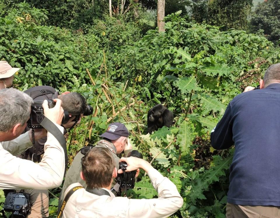 Mountain Gorilla Filming Tours-Gorilla Safari Experts Uganda