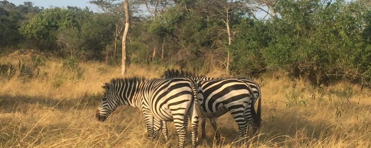 Top 5 Activities to include on Uganda Safari