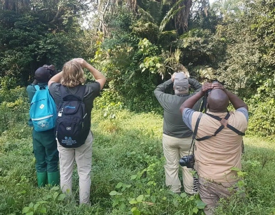 Best Birding Spots in Uganda