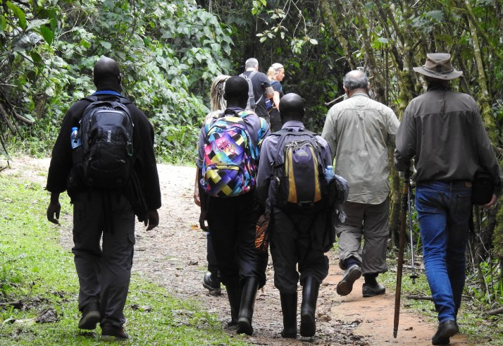 Walking Safari Across Bwindi forest