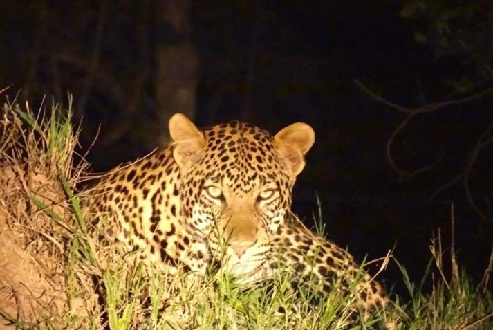 Night Game drive in Lake Mburo National park   Uganda Safaris