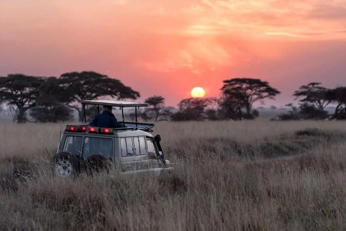 African Safari Tour, trips, Vacation & Holidays
