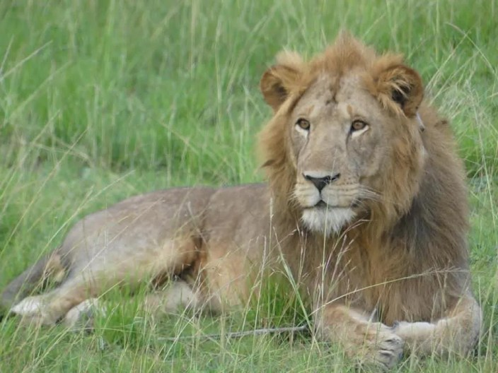 Africa Safari Holiday, trips, Vacation & Tours