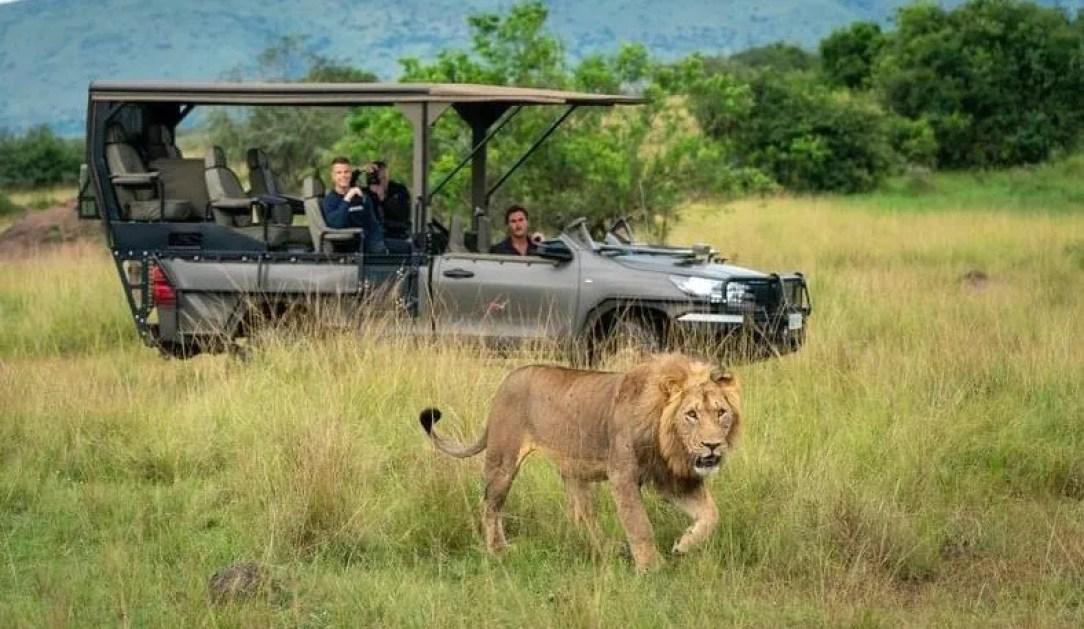 Luxury Uganda Safari Tours