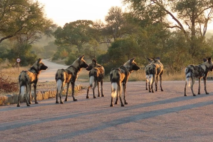 Top best safari destinations in Africa