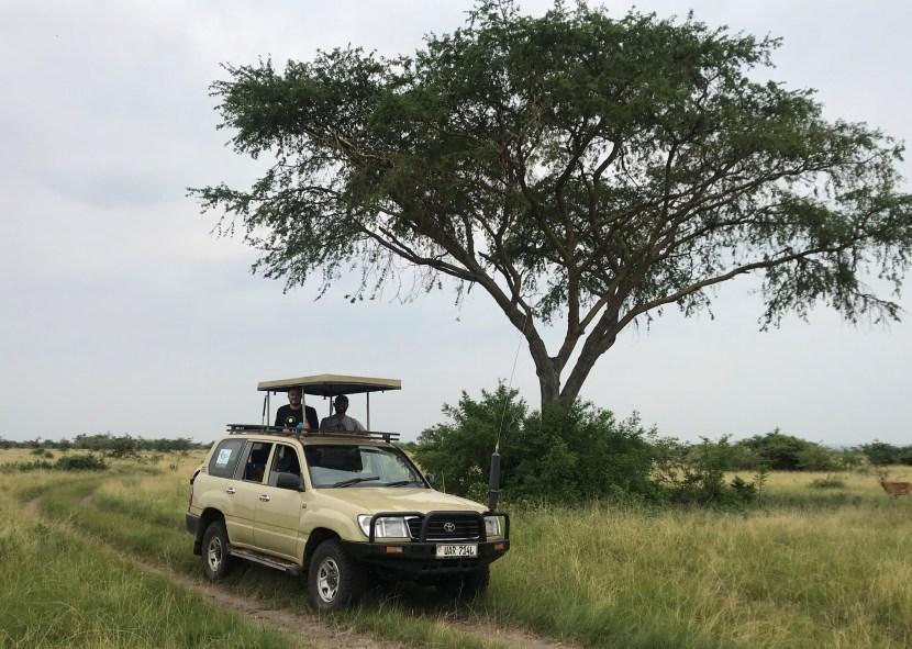 Wildlife Game Drive Safaris in Uganda