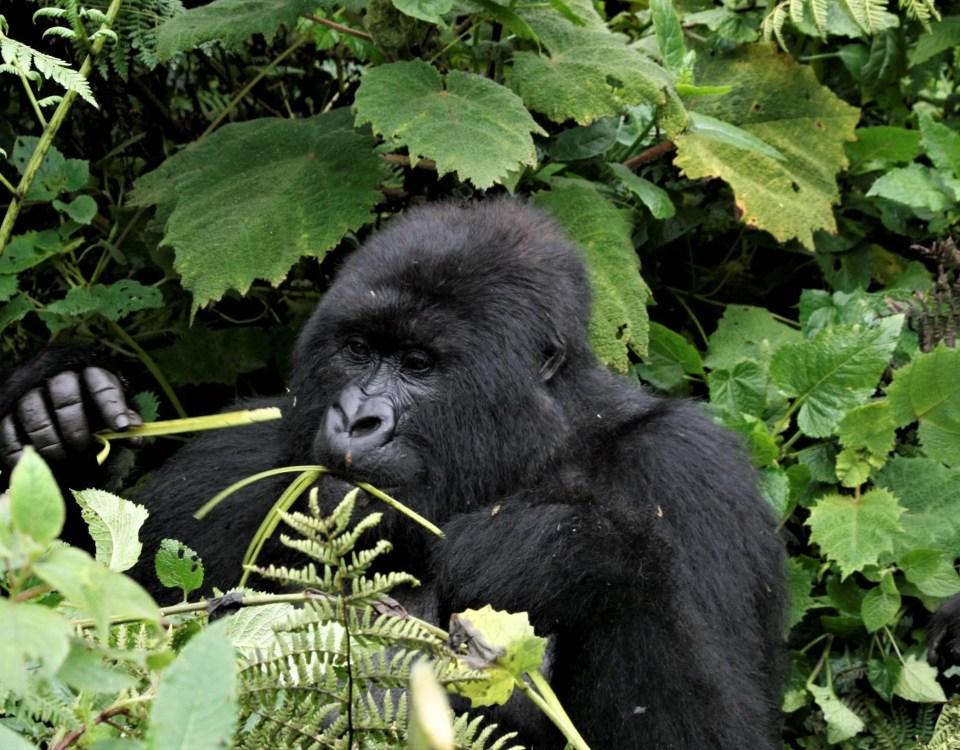 Luxury Rwanda Safari Tours, Holiday, Vacation & Trips