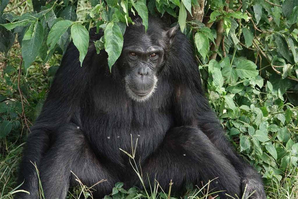 3-Days-Gorilla-Tracking-in-Bwindi2
