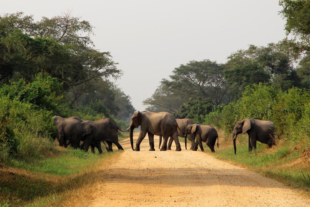 16 Days Uganda Wildlife Safari Holiday
