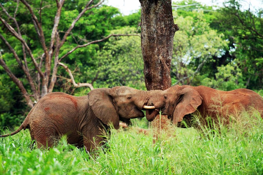 Uganda Wildlife Game Viewing Safari