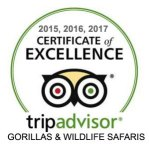 Gorillas Wildlife Safaris primate habituation tours experiences uganda