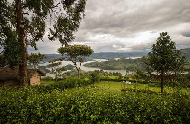 View from Arcadia Cottages Lake Bunyonyi gorillas and wildlife safaris
