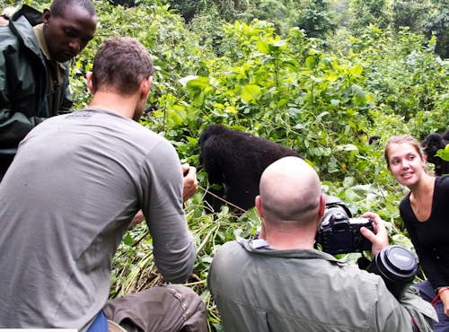 Uganda Gorilla Trek tour experience gorilla tracking safari Bwindi