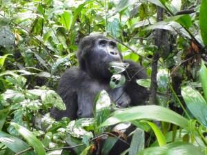 Cost of Rwanda gorilla trek, price for gorilla tour rwanda