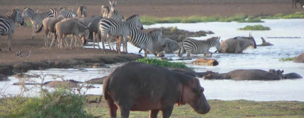 Lake Manyara, Serengeti Wildlife and Gorillas Trek - Tanzania Uganda Gorillas, BIG 5 Wildlife in Serengeti , Manyara- 10 Days Safari gorillas wildlife