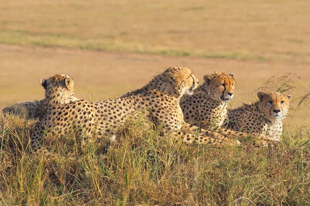 Top Kenya Safari Packages,Holidays,Tours,Getaways,Safari & Beach,Masai Mara,Shaba,Samburu, Great Rift Valley