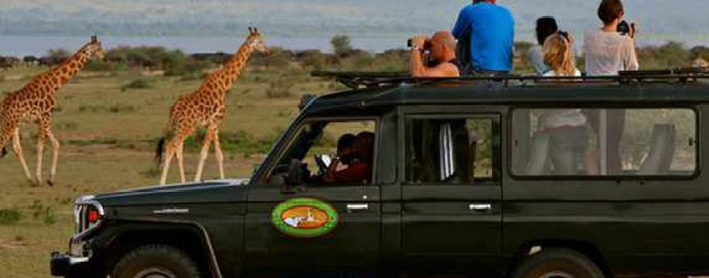 Paraa Safari Lodge game drive