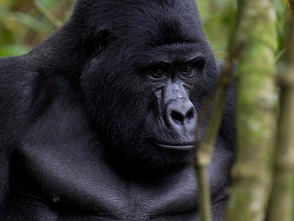 Uganda Gorilla Safaris to Mgahinga National Park