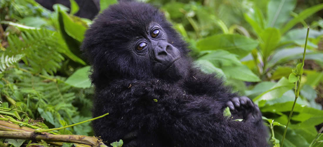 Gorilla Trekking Sectors in Bwindi