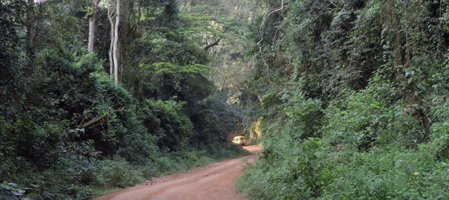 Kibale Forest National Par Safari