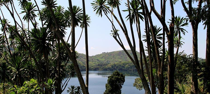 4 Days Kibale Forest Tour