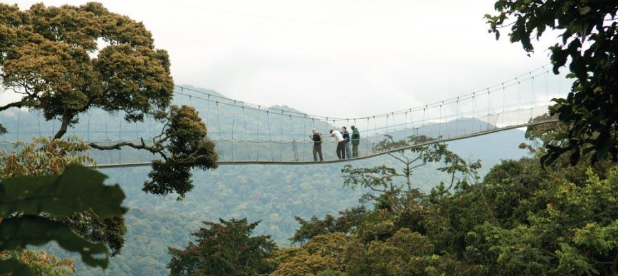 Rwanda Primates & Wildlife Safari