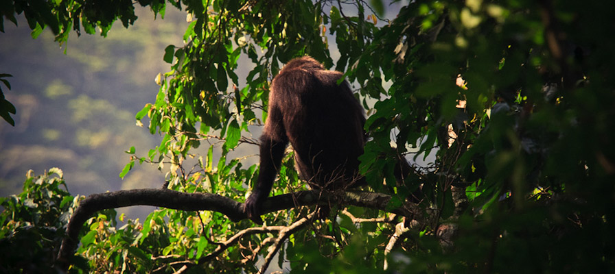 5 Day Chimps & Rwanda Gorilla Tour