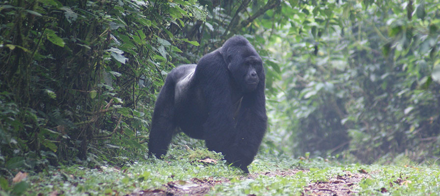 Gorilla Trek Africa & Uganda Wildlife Safari