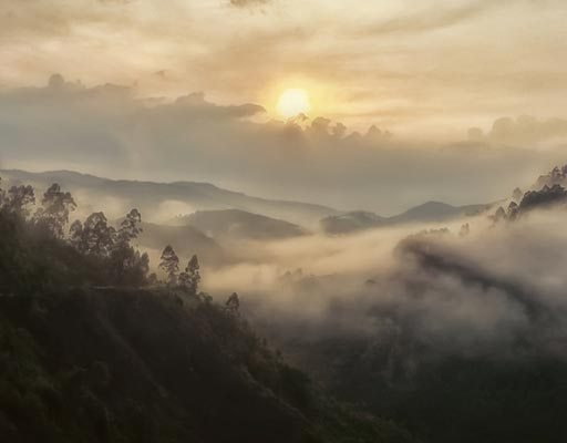 Misty Bwindi Impenetrable Forest Jungles in Uganda