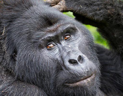 Uganda - Rwanda Gorilla Safari and adventure to remember