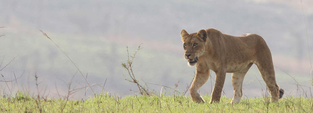 Uganda Wildlife Safaris, The Big 5
